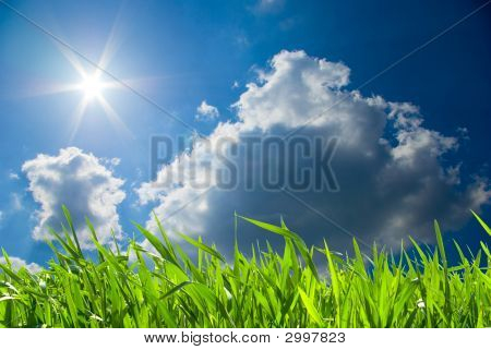 Green fresh grass against the blue sky poster