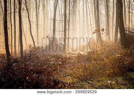 Fog In A Mysterious Dense Forest In The Morning During The Sunrise