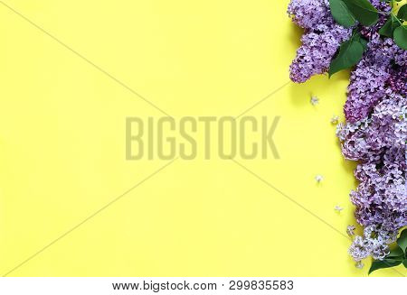 Lilac Flowers On Yellow Background. Copy Space