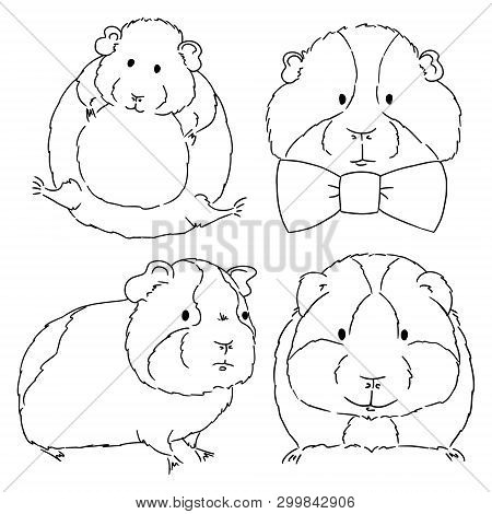 Sketches Of Different Guinea Pigs Sketches On White Background. Set Of Drawn Guinea Pigs By Free Han