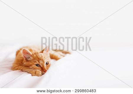 Cute ginger cat lying in bed. Fluffy pet is gazing curiously. Stray kitten sleep on bed first time in its life. Cozy home background, morning bedtime. poster
