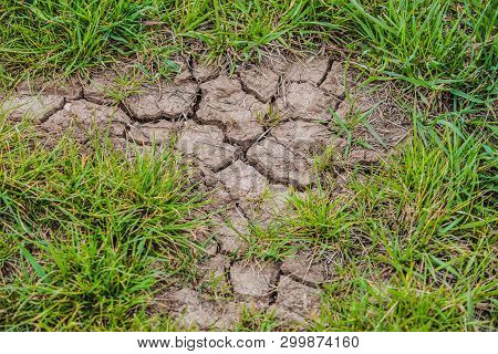Parched Brown Earth With Cracks On Surface And Fresh Green Grass. Bad Weather Conditions And Global