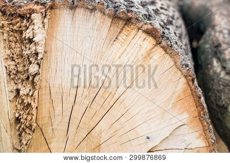 Wood Texture. Stump In The Forest, Macro Stump