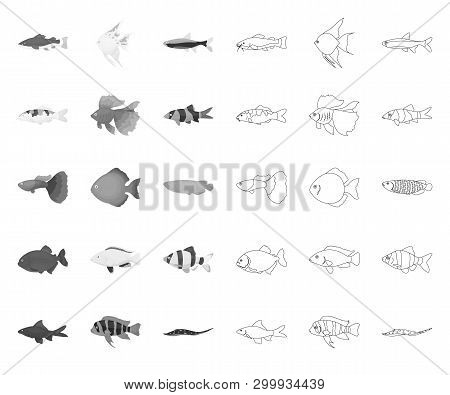 Different Types Of Fish Mono, Outline Icons In Set Collection For Design. Marine And Aquarium Fish V