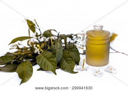 Close Up Of Essential Oil Of Indian Jasmine Flower Or Juhi Or Jasminum Auriculatum Isolated On White