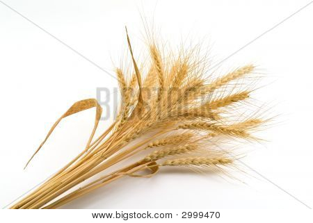 Bundle Of Wheat