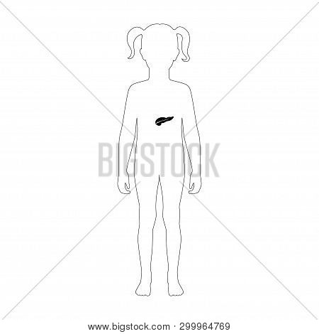 Vector Isolated Illustration Of Pancreas Anatomy In Girl Body. Human Digestive System Icon. Internal