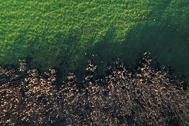 Landscape Background Of Aerial View Over Reedbed And Water, Annecy Lake, Savoy