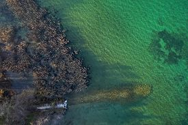 Top View Landscape, Aerial View Of Reedbeds And Water, Annecy Lake, Savoy