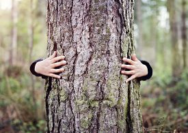 Tree hugging, little boy giving a tree a hug concept for love nature