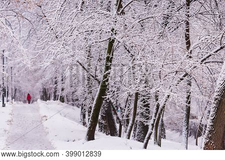 Winter Landscape Scene With Falling Snow - Wonderland Forest With Snowfall. Snowy Scene With Christm