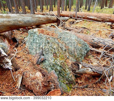 Stoned And Logged In - A Large Rock Among Some Logs In The Woods West Of Cold Springs Campground - N