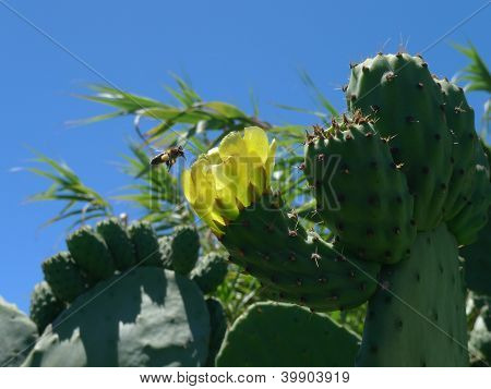 bee and cactus flower