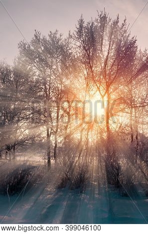 Forest landscape, winter forest landscape, sunrise in the winter forest. Wonderland winter forest, bare forest trees and snowdrifts on the foreground. Winter forest sunny scene,forest nature,winter forest,sunrise in the forest