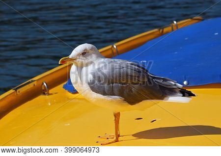 Seagull On The Yellow Taxi Boat In One Of Canal In Venice, Italy During Sunny Day.