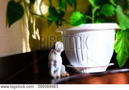 Authentic Home Concept, House Plants Grown In White Pot And Porcelain Figurine Of Dog, Moning Soft S