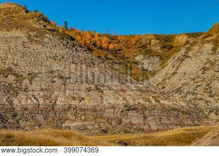 Fall Colours Dot The Badlands. Tolman Badlands Heritage Rangeland Natural Area, Alberta, Canada