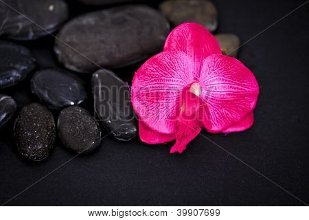 Orchid And Spa Massage Stones On Black