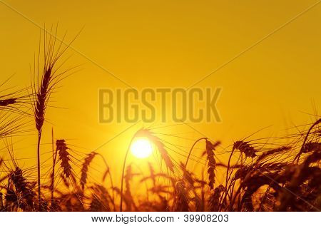 golden sunset over harvest field in summer