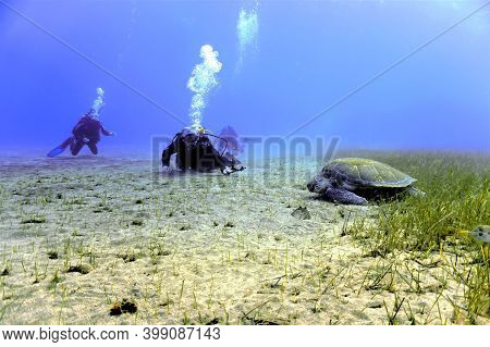 Underwater Photo Of A Scuba Divers And A Green Turtle By The Seabed Of Grass. From A Scuba Dive In T