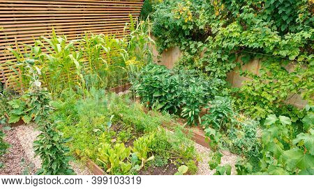 Diy Wooden Raised Garden Beds For Growing Organic Vegetables And Greens. Top View Of A Modern Vegeta