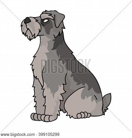 Cute Cartoon Schnauzer Sitting Dog Vector Clipart. Pedigree Kennel Doggie Breed For Kennel Club. Pur
