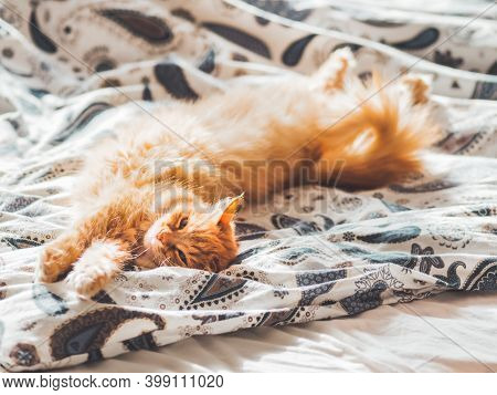 Cute Ginger Cat Lying In Bed. Fluffy Pet Comfortably Settled To Sleep. Cozy Home Background With Fun