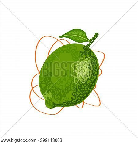 Lime Hand Drawing. Isolated Green Lime With Leaf On White Background. Whole Lemon. Hand Drawn Botani