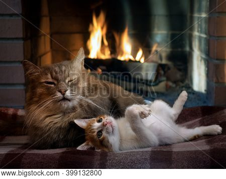 Cats Are Blissfully Warming Themselves By The Fireplace