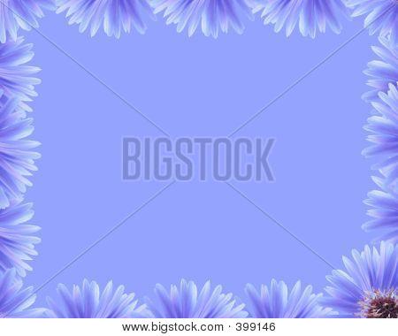 Purple Flower Border