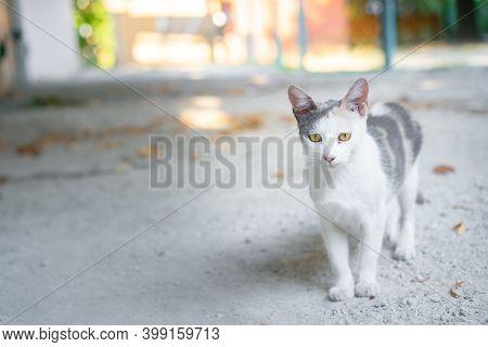 Stray Cat Walking Down The Street.stray Cat Walking Down The Street