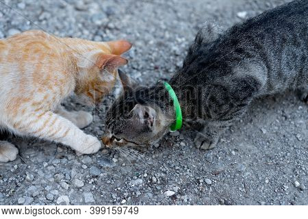 Two Cats Met On The Street.two Cats Met On The Street