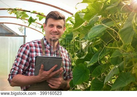 Agronomist Man With Tablet Working In Greenhouse With Cucumbers And Looking At Camera And Smiling. A