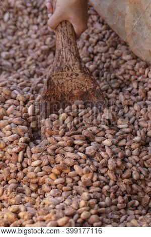Cocoa Beans Are Fermented In Wooden Boxto Develop The Chocolate, Standard Fermentation Of Cocoa Usin