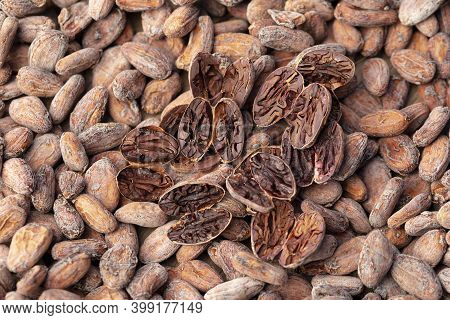 Cacao Beans Cut Test Which Is Of A Brown Color. The Cut Test As The Beans Are Cut Lengthwise Through