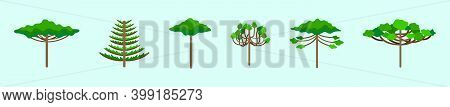 Set Of Araucaria Tree Cartoon Icon Design Template With Various Models. Modern Vector Illustration I