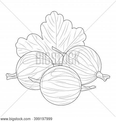 Gooseberry. Berries.coloring Book Antistress For Children And Adults. Zen-tangle Style.black And Whi