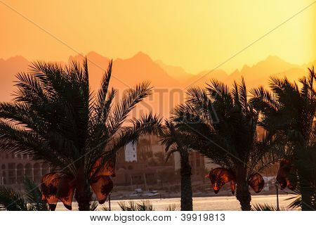 Silhouettes Of Palm Trees At Sunset On The Red Sea