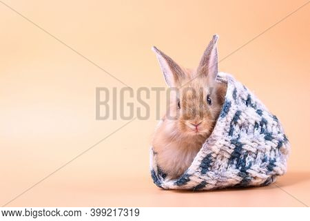 Cute Little Rabbit, Fluffy Fur, Tucked In A Knitted Hat, Soft Orange Background. Easter Festival