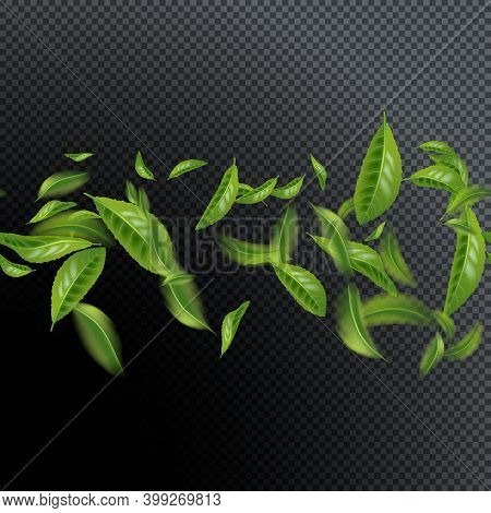 Seamless Pattern Beautiful Flying Green Tea Leaf Isolated On Transparent Black. Leaves Spring Backgr