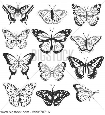 Set Of Realistic Black And White Butterflies Isolated On White Background. Collection Of Vintage Ele