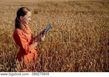 Caucasian Agronomist Checking The Field Of Cereals And Sends Data To The Cloud From The Tablet. Smar