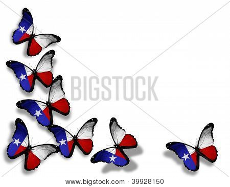 Texas Flag Butterflies, Isolated On White Background