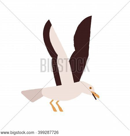 Simple Style Colorful Portrait Of Flying Seagull Isolated On White Background. Beautiful Marine Nord