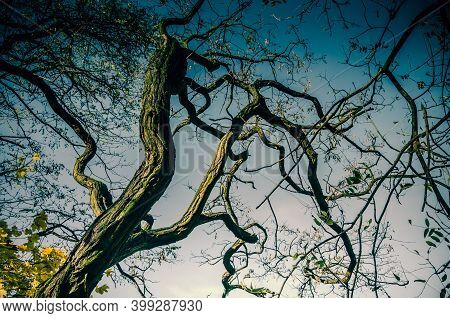 Twisted Barren Tree Branches Against Dark Sky