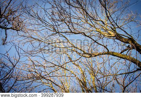Barren Tree Branches In Autumnal Light Against Blue Sky On A Sunny Day