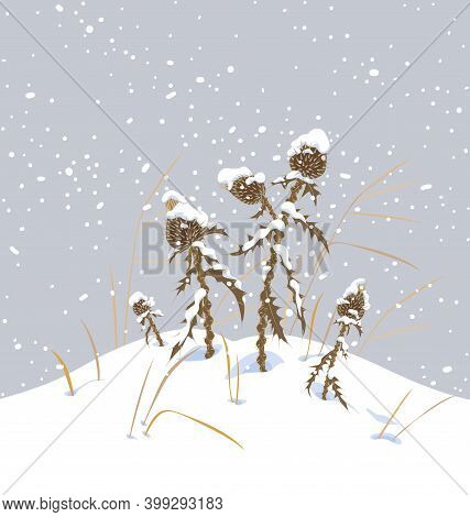 Winter Snow Covered Meadow Plants. Dry Thistle With Prickly Stem And Leaves Under The Snow On Gray B
