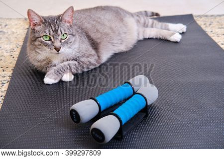 The Cat Is Lying Next To Sports Dumbbells, Close-up. Concept Of Sports And Fitness Based On Isolatio