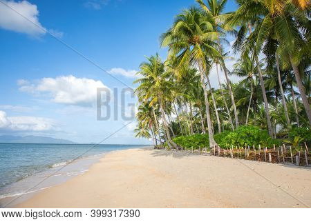 tropical beach with cocnut palm tree