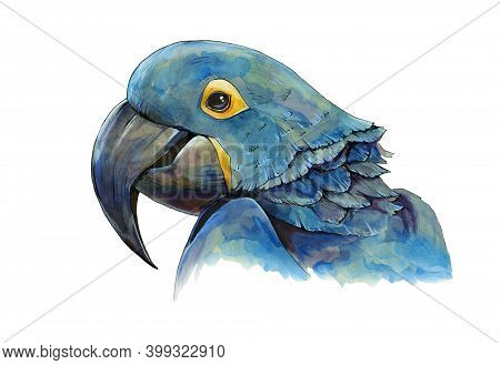 Blue Macaw Parrot Watercolor Illustration. Hand Drawn Animal Realistic Portrait. Tropical Exotic Blu